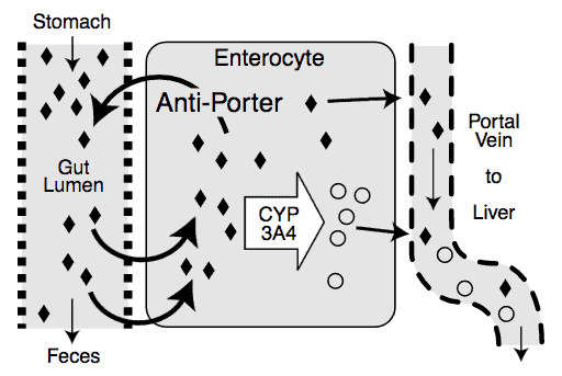 Antiporter illustration