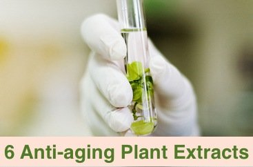 6 Anti-aging plant extracts you can use now