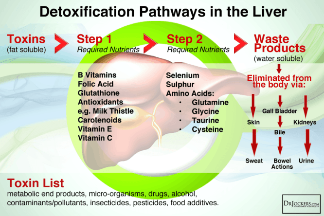 Proper detoxification requires proper nutrition