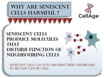 Eliminate Senescent Cells