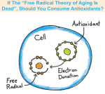 Free radical theory of aging