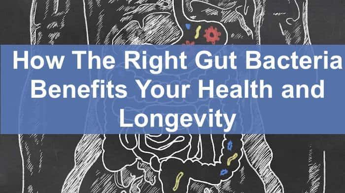 right gut bacteria
