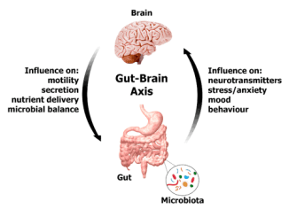 gut bacteria benefits