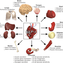GLP-1 weight loss