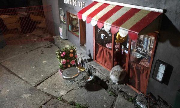 anonymouse suecia restaurante ratos 11