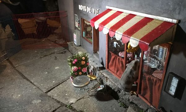 anonymouse suecia restaurante ratos 3