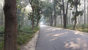 The woods on the road out of Gorakhpur.