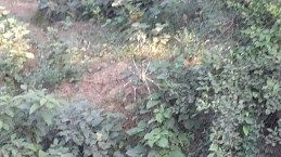 Spiders in the woods coming out of Gorakhpur.
