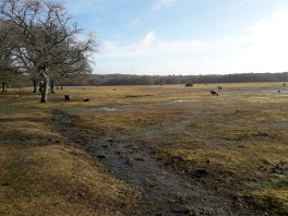 Heath-land in the New Forest