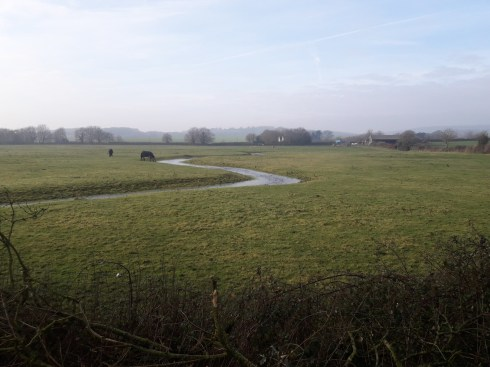 River and field