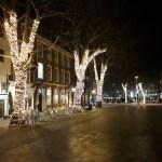 Lights on trees