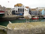 Seagull on wall
