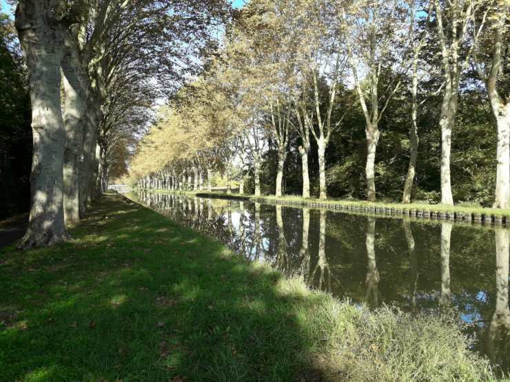 Tree lined canal