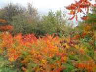 More autumnal colours