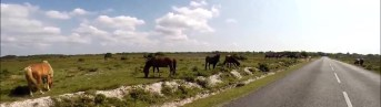 Horses by the road