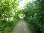 Cycle path through the trees