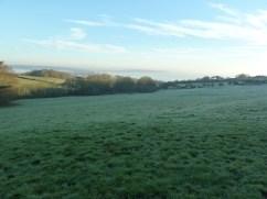 Frosty field