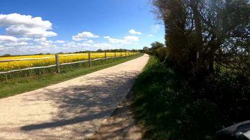 Road field of Rape seed