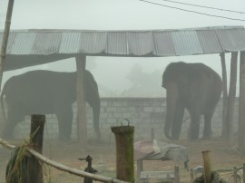 Elephants in the Chitwan national park
