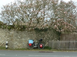 Passepartout under a magnolia tree
