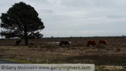 Ponies under a tree