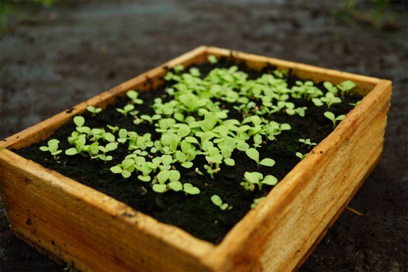 Anzuchtkasten für Saatgut