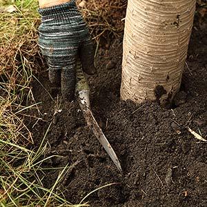 Bäume und Sträucher umpflanzen im März