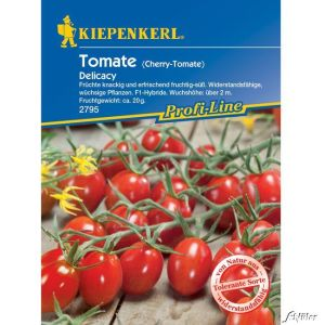 Dattel-Tomate 'Delicacy' F1