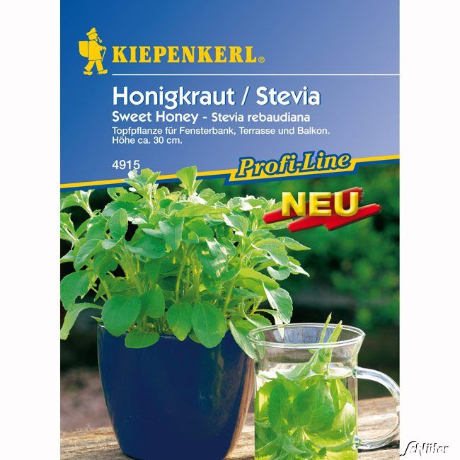 Stevia/Honigkraut 'Sweet Honey'