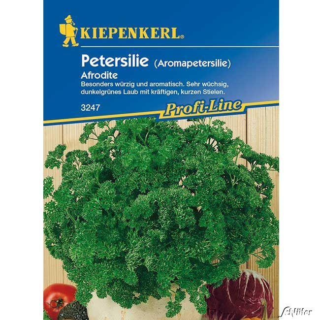 Petersilie (Aromapetersilie) 'Afrodite'