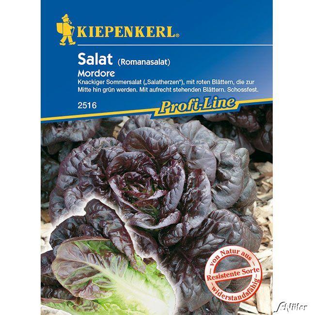 Romana-Salat 'Mordore'
