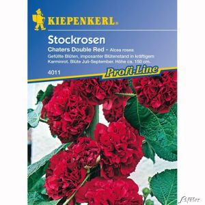 Stockrosen 'Chaters Double Red'