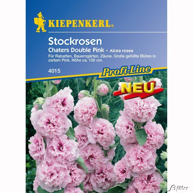 Stockrosen 'Chaters Double Pink'