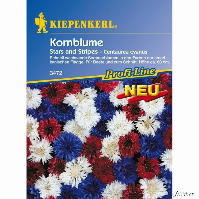 Kornblumen 'Stars and Stripes'