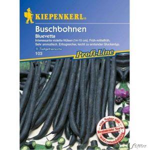 Buschbohne 'Bluevetta'