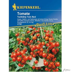 Ampeltomate 'Tumbling Tom Red'