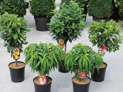 gartengestaltung obstbäume obstbäume | obstgehölze | ratgeber | garten schlüter
