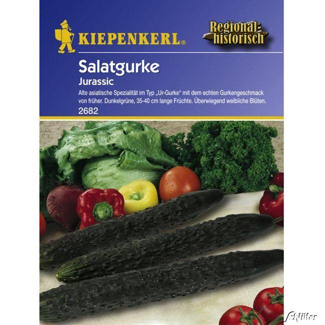 Salatgurke 'Jurassic'