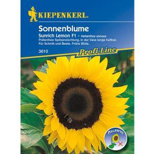 Sonnenblume 'Sunrich Lemon'