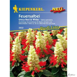 Feuersalbei 'Unica Red & White'