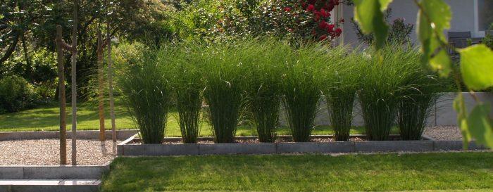 Im Garten Abtauchen Gartengestaltung Christina Dorsch In