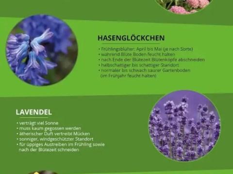 gartengestaltung pflegeleichte pflanzen pflegeleichter garten: tipps zu pflanzen, möbeln & co.