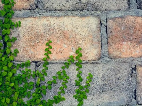 gartenzaun aus stein originelle zäune: tipps zum zaun gestalten für anfänger