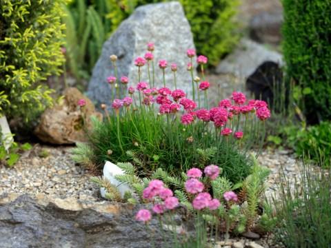 blumenbeete gestalten bilder blumenbeet gestalten mit steinen » schöne ideen