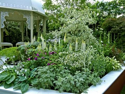 hochbeet bepflanzen stauden hochbeet als sichtschutz » so setzen sie es wirkungsvoll ein