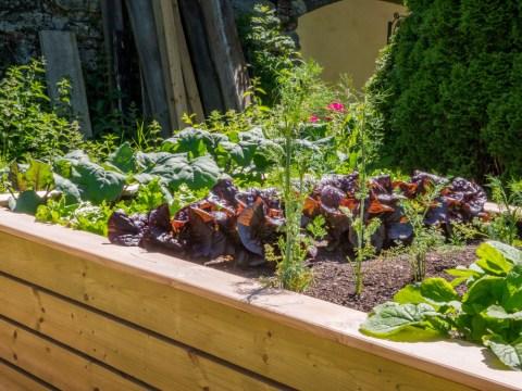 hochbeet bepflanzen stauden hochbeet » was können sie hier anpflanzen?