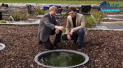 interview oase tv gruenes wasser im gartenteich