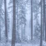 Winter Forest Oregon