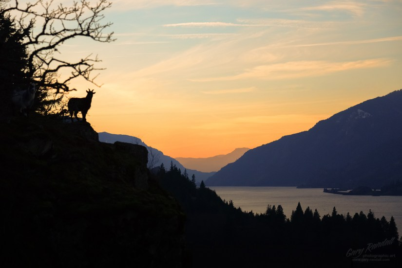 The Guardian of The Gorge