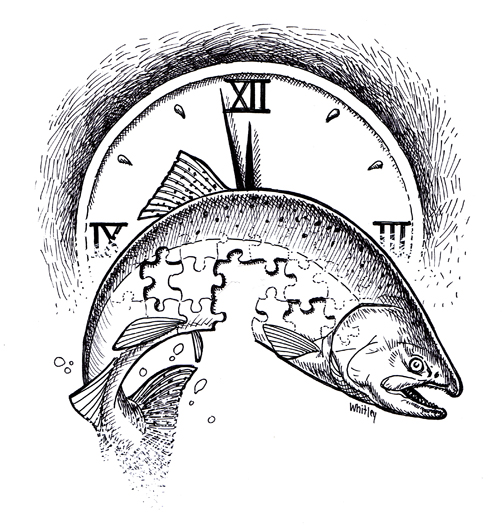 Salmon Clock. Time is running out.